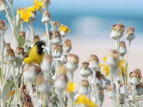 20061111130330-pajaro-flores.jpg