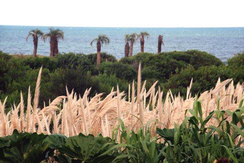 20070421143727-palmeras.jpg