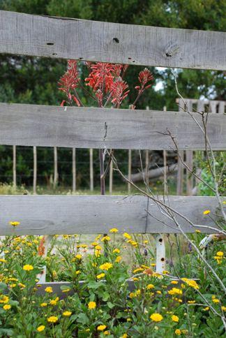 días y flores